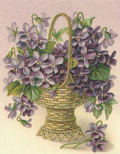 vintage violets in a basket
