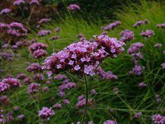 Dept of Landscape Plant ID