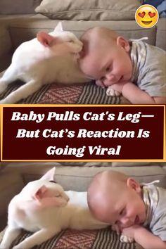 #Baby #Pulls #Cat #Leg #Reaction #Viral