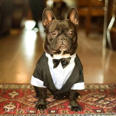 Who doesn't love a French bulldog in a tuxedo?