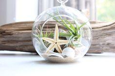 Beach terrarium / Air plant terrarium / Starfish terrarium / Coastal decor / Special occasion gift / Small plant garden