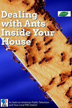 GardenRx reveals the secrets of getting rid of those pesky ants without harmful chemical pesticides.