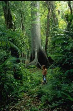 Belize Rainforest | Adventure Travel, Rainforest Reserve, Massage Spa, Honeymoon, Belize ...