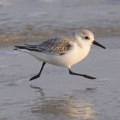 sandpiper running on sea shore♥ Troubeld times I ran to your shore ..and find calm waters and open arms ...appreciate♥