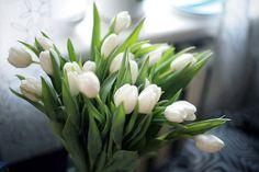 Amo tulipa...