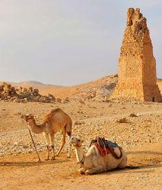 Syria, Palmyra 265 | Flickr - Photo Sharing!