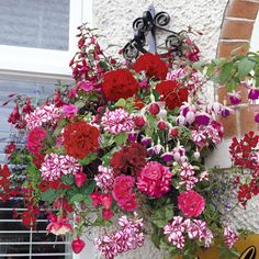 Hanging Basket Trailing Collection - 5 Ivy Geraniums, 5 trailing Fuchsias