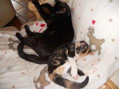 Les inséparables #chat #cat #chambredhote #bandb #cute #mignon #tarn #castelnaudemontmiral #gaillac http://lamaisonduchai.com/accueil.html