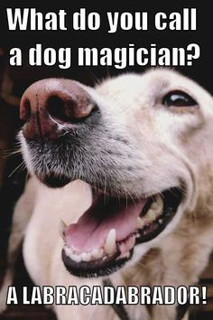 Over 65 Unforgettable Dog Memes Hilarious Pictures Unleashed! Funny Dog Captions, Funny Dog Memes, Funny Dogs, Cute Dogs, Pet Memes, Stupid Memes, Funny Quotes, Dog Jokes, Animal Jokes
