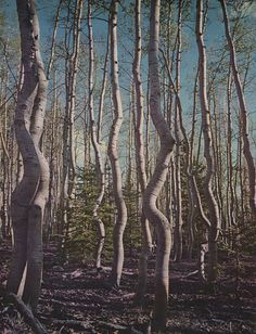cool trees