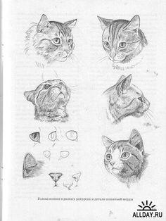 как нарисовать кошку - Поиск в Google