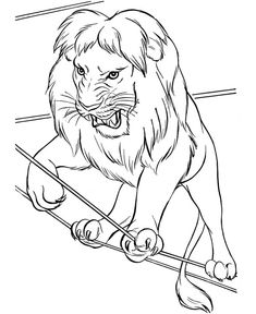 Circus Lion Walking On Rope Coloring Page : Color Luna Lion Coloring Pages, Coloring Pages For Kids, Lion Walking, Lion King Drawings, Lion Pictures, Christmas Coloring Pages, Online Coloring, Christmas Colors, Colour Images