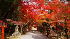 錦に染まった京都大原野神社の鳥居
