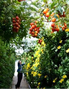 Jardiner sur le toit du BHV Marais