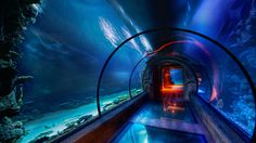 Underwater hotel The Maldives | The Secret Underwater Passage, under Mandalay Bay hotel in Las Vegas ...