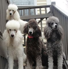 SugarPop (top), Cloud (left), Bulay (center) and Lacy (right, Bulay's mother).
