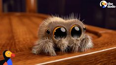 Lucas The Spider Creator Explains How He Makes People Fall In Love With Spiders | The Dodo - YouTube