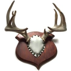 1955 Mounted Whitetail Deer Antlers Large Trophy Rack with Michigan... ($125) ❤ liked on Polyvore featuring home, home decor, small item storage, deer home decor, deer plaque, trophy plaques, thank you plaques and deer antler rack