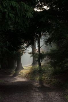 Slow New Year Intentions In 2019 A magical mist coming through shadowed pine trees and my slow New Y Pine Trees Forest, Mystical Forest, Dark Tree, Beautiful Ruins, Landscape Tattoo, Slytherin Aesthetic, Woods Photography, Nordic Interior, Nature Pictures