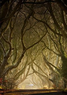 magical trees...I think it was somewhere in Ireland
