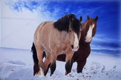 horses on snow by Grace Olsson