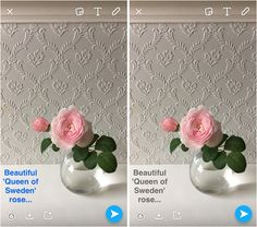 Flowerona Tips : 5 Different Text Options in Snapchat | Flowerona