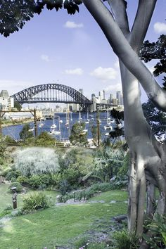 The best things to do in Sydney: events, attractions, festivals and must-see places to visit, all in one spot Stuff To Do, Things To Do, Your Life, Sydney, Places To Visit, Bucket, At Least, Garden, Things To Make