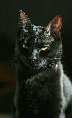BLAC poesje