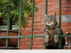 Cat photograph by Mitsuaki Iwago