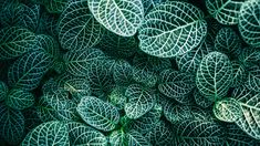 A beautiful free photo of green plants and nature leaves. This image is free for both personal and commercial use. No attribution required. Plant Images, Plant Pictures, Colorful Plants, Tropical Plants, Plantas Indoor, Nerve Plant, Perfect Plants, Free Plants, Yellow Leaves