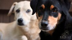 Sweet dogs from our Retreat Bela Natureza, ideal place for dog lovers