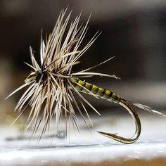 Coq de Leon tail, Polish quill, Cree hackle, size 16 hook. #flyfishing #flytying #flytyingaddict #flytyingjunkie #fluebinding #flugbindning #dryfly #dryordie #troutfood #troutfishing #mayfly #flyfishinglifestyle #tyingflies #feathers #polishquills #whitingfarms