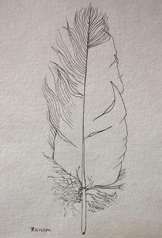 Tattered black Feather -- original ink drawing