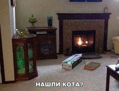 где кот?