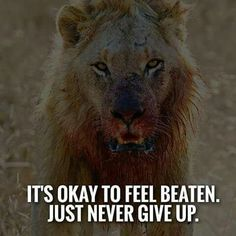 Best Positive Quotes : QUOTATION - Image : As the quote says - Description It's okay to feel beaten. Best Positive Quotes, Short Inspirational Quotes, Great Quotes, Motivational Quotes, Inspiring Quotes, Strong Quotes, Inspirational Thoughts, Positive Life, Lion Quotes