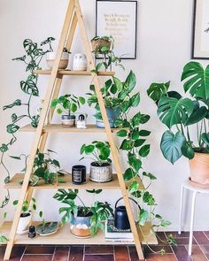 Indoor Plant Decor ideas are fun for people of all ages. You don't have to have a huge garden or your Indoor Plant Decor Ideas are perfect for small garden arrangements. There are many different plants that are suitable for… Continue Reading → Home Garden Design, Home And Garden, Plantas Indoor, House Plants Decor, Indoor House Plants, Indoor Plant Shelves, Garden Shelves, Window Shelf For Plants, Plants In The Home