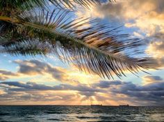 Feeling the ocean breezes. Courtesy of @FtLauderdaleSun