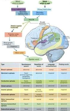 Great Layout of Aphasia Types