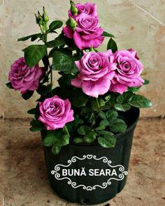 Imagini buni dimineata si o zi frumoasa pentru tine! - BunaDimineataImagini.ro Plants, Religion, Weddings, Google, Beauty, Hip Bones, Flowers, Wedding, Plant