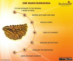 One Mukhi Rudraksha is one of the rarest bead found in nature. Considered most auspicious, it is said to have been blessed by Lord Shiva himself.