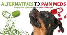 Alternatives to pain meds for dogs