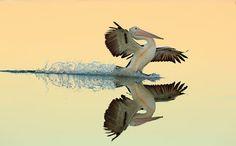 A perfect landing by Bret Charman, New South Wales, Australia
