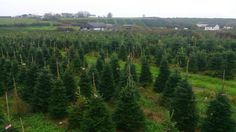 Swansea Winter Wonderland, one of Wales' best attractions. You can choose an online large number of Christmas trees.