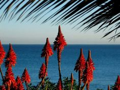 Viña del Mar, Chile  Photograph by Laban West, My Shot