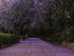 purple rain bossip