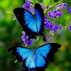 Gorgeous Butterflies