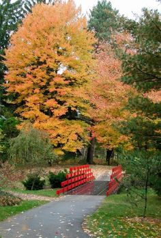 Dow Gardens- Red bridge in the fall!  Midland Michigan