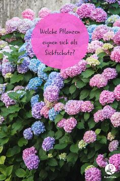Pflanzen als Sichtschutz: Unsere Top 15 für Garten & Balkon - Plantura Which plants are suitable as privacy screens? We have gathered 15 great plants for you, which give you more privacy and look grea Privacy Screen, Garden Design, Garden Art Sculptures, Garden Layout, Balcony Plants, Diy Garden Decor, Plants, Pallets Garden, Garden Projects
