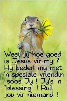 Ruil jou vir niemand!!! Uplifting Christian Quotes, Christian Messages, Christian Sayings, Prayer Verses, Bible Verses, Beautiful Quotes Inspirational, Birthday Verses For Cards, Lekker Dag, Afrikaanse Quotes