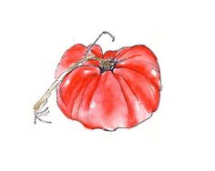 Ink and Watercolor Illustrations | Watercolor and Ink Illustration - Tomato For my kitchen